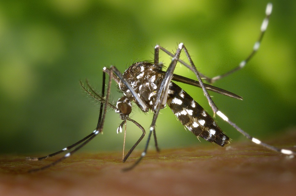 Un caso di West Nile, è caccia alle zanzare