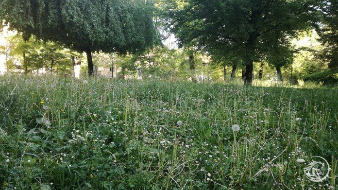 Erba non tagliata nei giardini di Piacenza