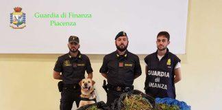 La Finanza scopre coltivazionee di marijuana in pieno centro a Piacenza