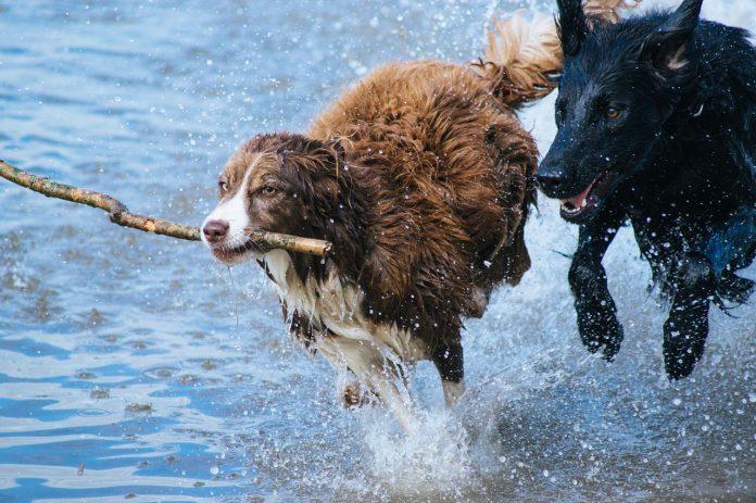 Al via la parte pratica del patentino per detentori di cani