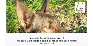 Il lupo italiano una razza speciale