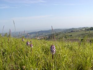 Paesaggio Protetto Colli del Nure Pontedell'Olio (PC)