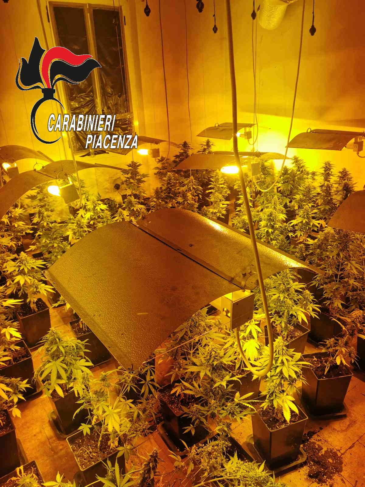 I carabinieri scoprono serra di cannabis indica